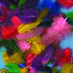 spotty feathers in bright colours