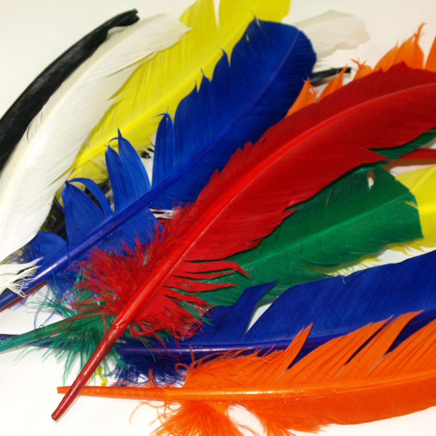 extra large quill feathers
