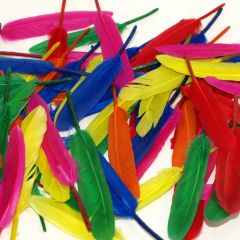 small quill feathers